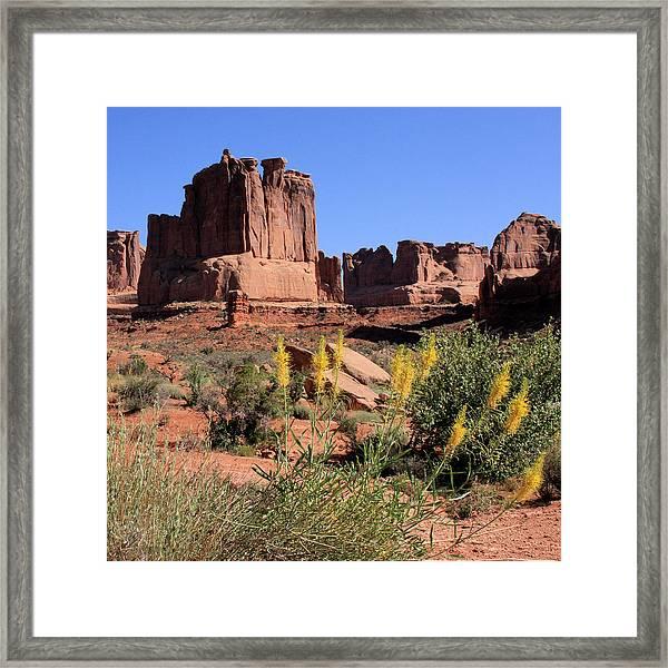 Desert Glory Framed Print