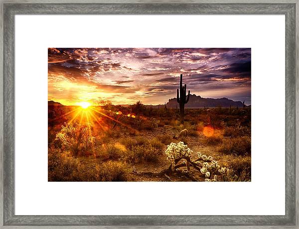 Desert Sunshine  Framed Print