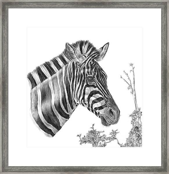 Designer Stripes Framed Print