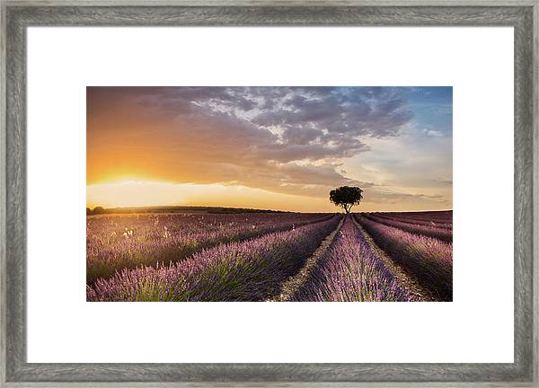 Destination Lavender Framed Print
