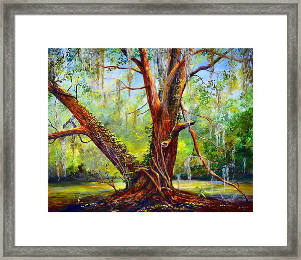Devine Oak Framed Print