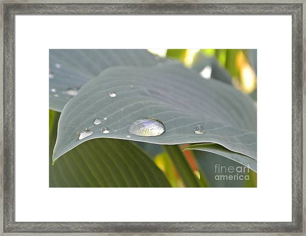 Dew Droplets Framed Print