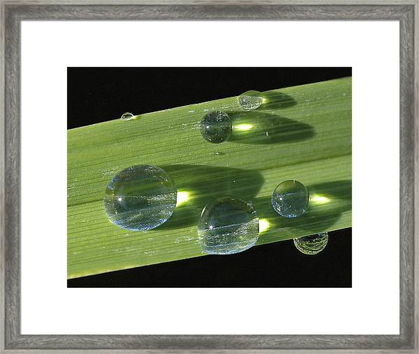 Dew Drops On Leaf Framed Print
