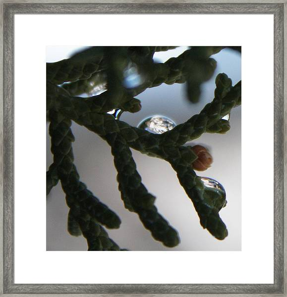Dew Mountain Collection Framed Print