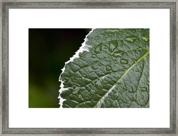 Dew On Leaf Framed Print