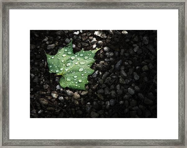 Dew On Leaf Framed Print