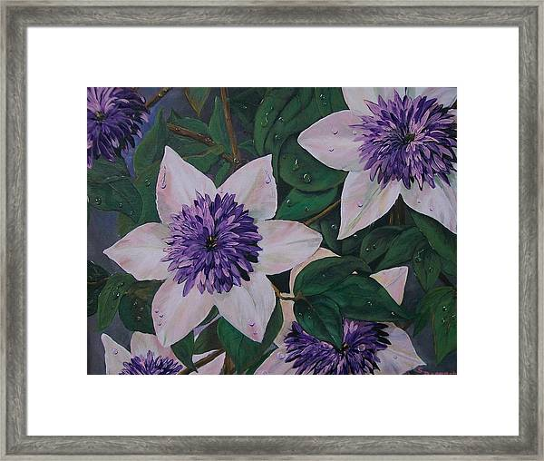 Clematis After The Rain Framed Print