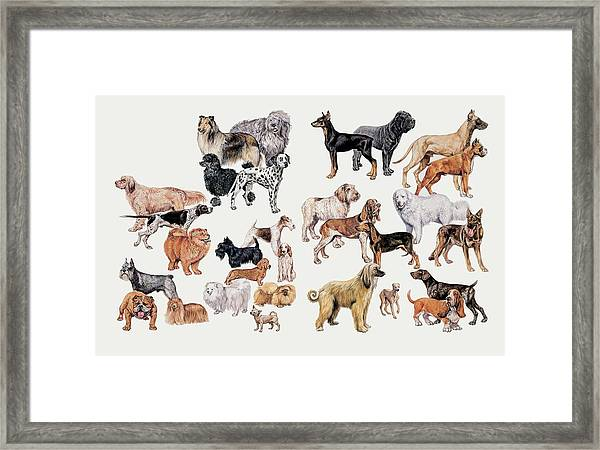 Different Breeds Of Dogs Framed Print by Deagostini/uig/science Photo Library