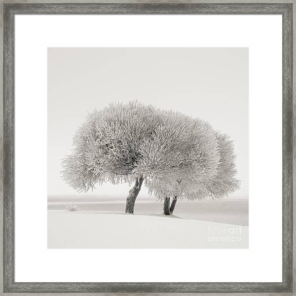 Different Season Framed Print