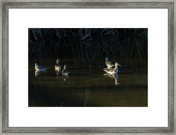 Digital Oil Of Sandpipers Framed Print