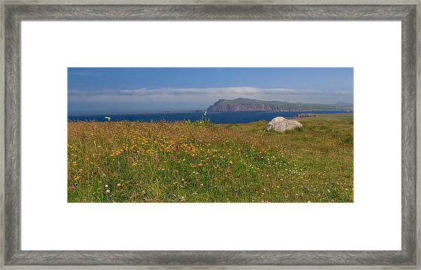 Dingle Wildflowers Framed Print
