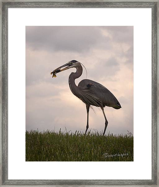 Dinner Time Framed Print
