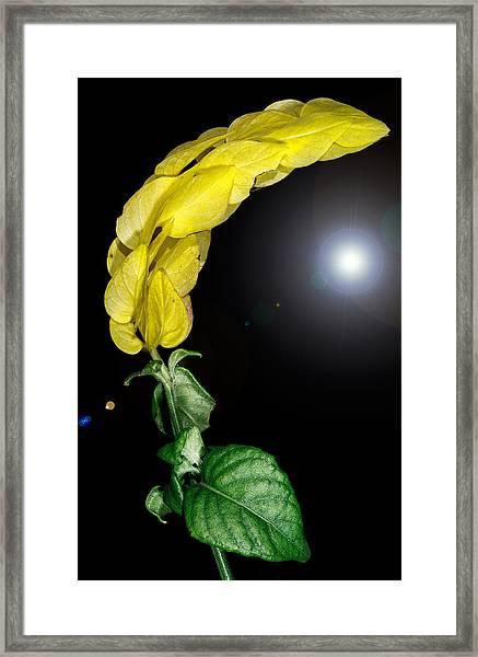 Distant Sun Framed Print