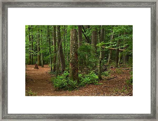 Diverted Paths Framed Print