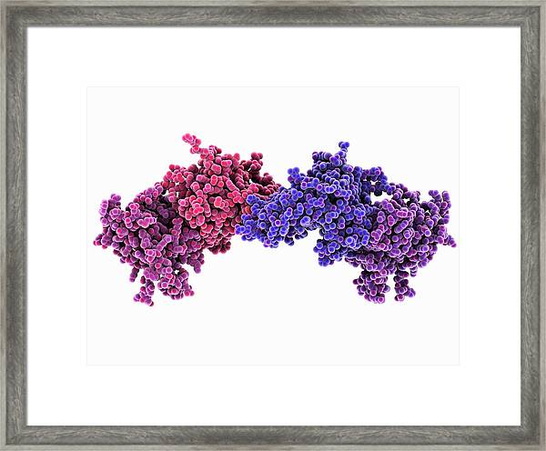 Dna Methyltransferase Molecule Framed Print