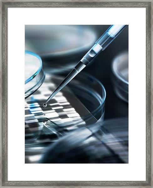 Dna Sample Being Pipetted Into Petri Framed Print