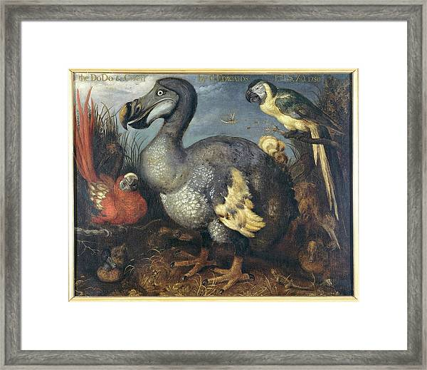 Dodo And Macaws Framed Print