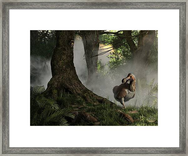 Dodo Bird Framed Print