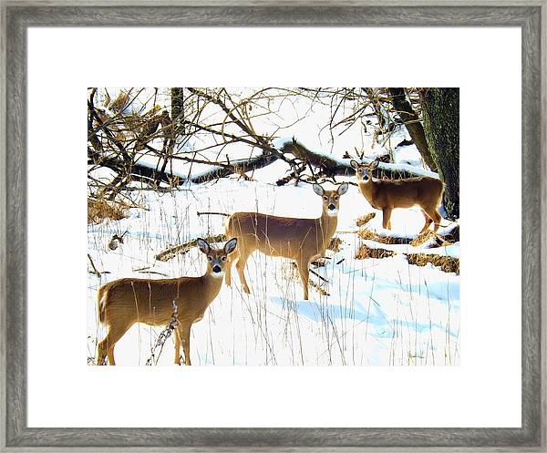 Does In The Snow Framed Print