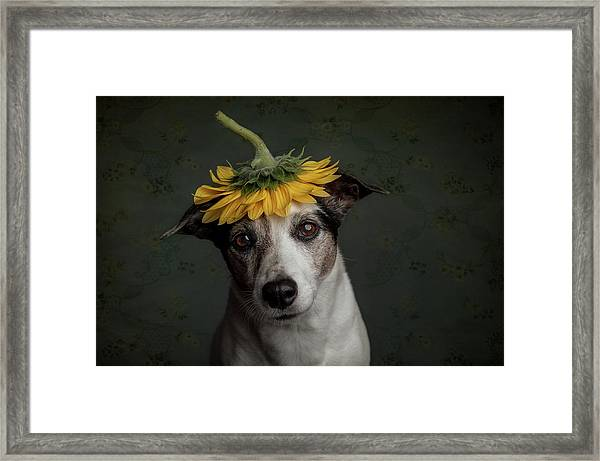 Does She Realize She Looks Like A Sunflower.... Framed Print