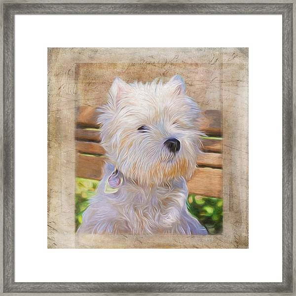Dog Art - Just One Look Framed Print