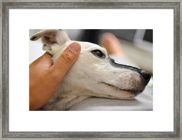 Dog Enjoying A Human Touch Framed Print by Ioannis Tsotras