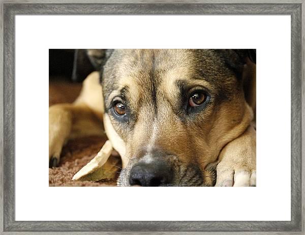 Dog Eyes Framed Print