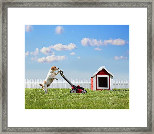 Dog Mowing Lawn Near Dog House Framed Print by Pm Images