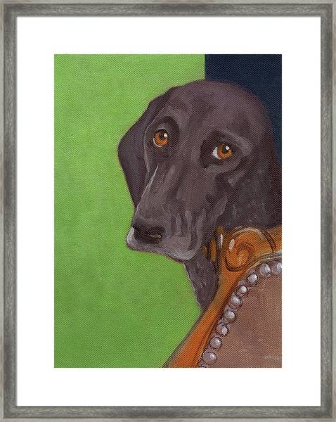 Dog On Chair Framed Print