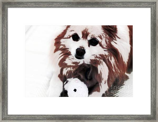 Dog Playing With Toy Framed Print