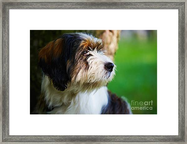 Dog Sitting Next To A Tree Framed Print