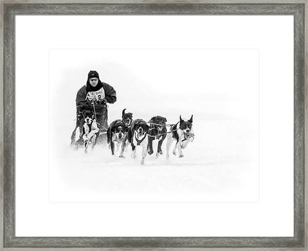 Dog Sled Team Framed Print