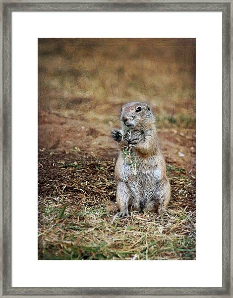 Doggie Snack Framed Print