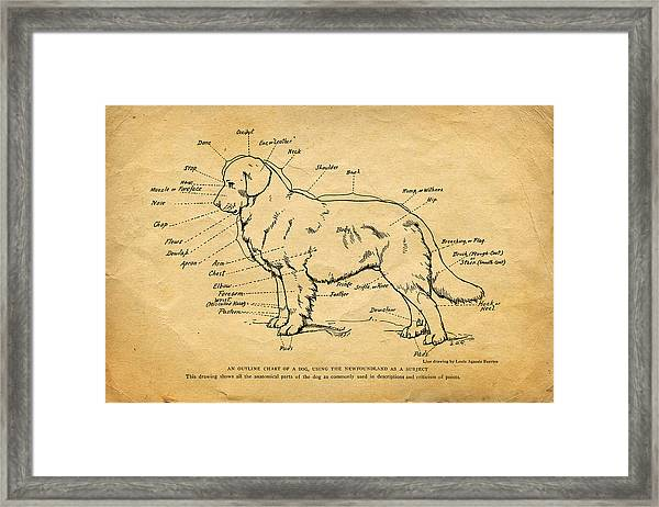 Doggy Diagram Framed Print