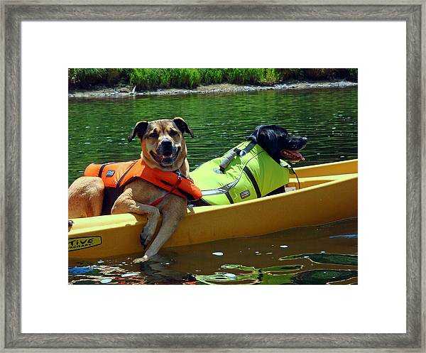 Dogs In A Kayak Framed Print