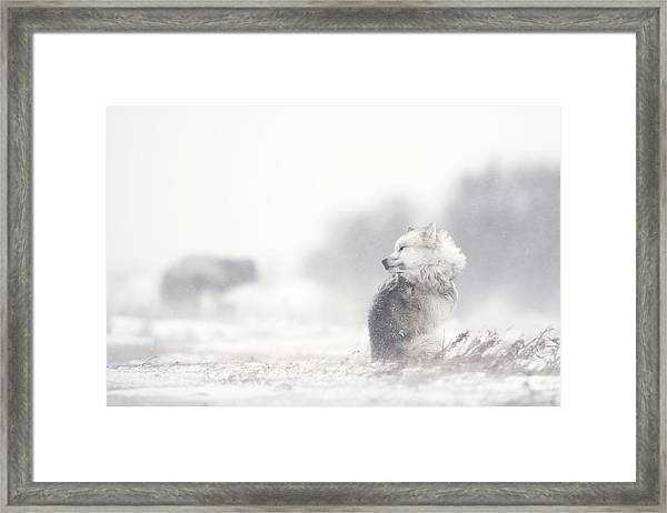 Dogs In The Storm Framed Print