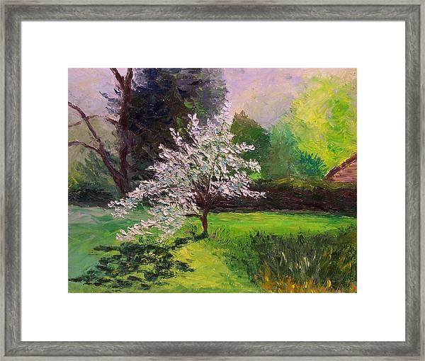 Dogwood In Bloom Framed Print