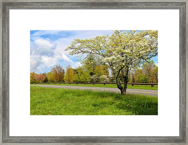 Dogwoods At Dickey Ridge Framed Print