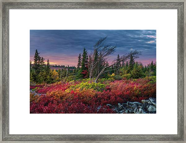 Dolly Sods Windswept Sunset Framed Print