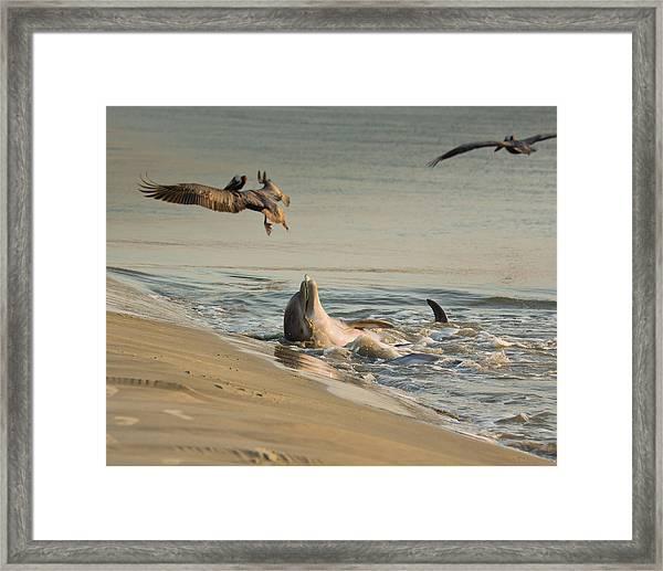 Dolphin Joy Framed Print