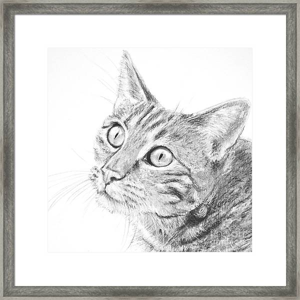 Domestic Cat Portrait Framed Print