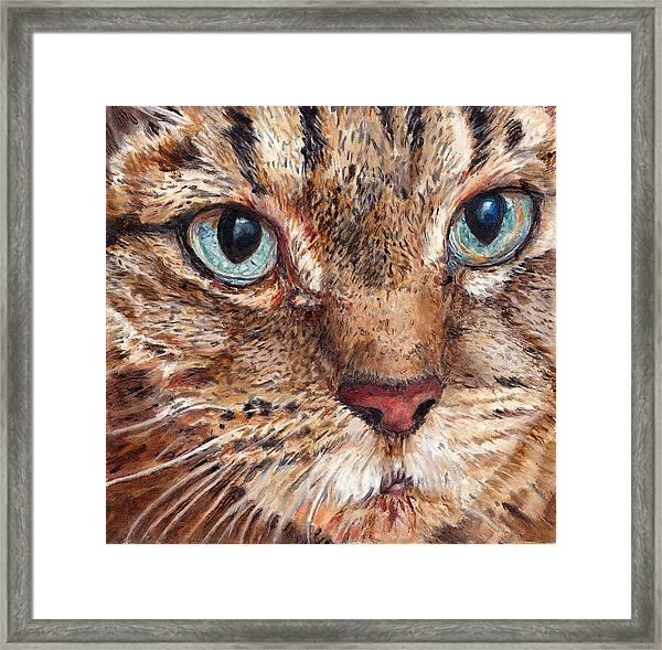 Domestic Tabby Cat Framed Print