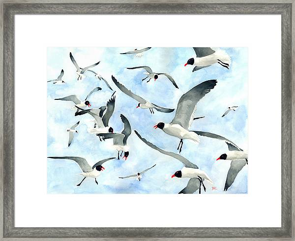 Don't Feed The Seagulls Framed Print