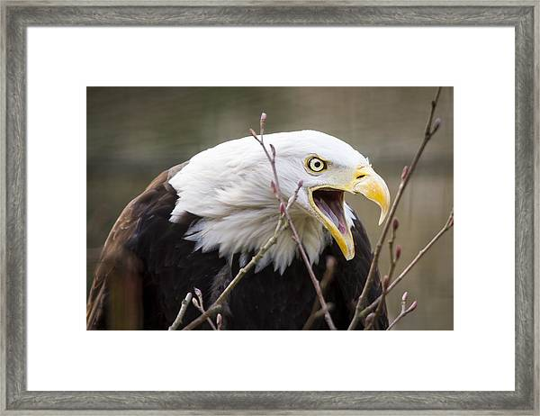 Don't Mess With This One Framed Print