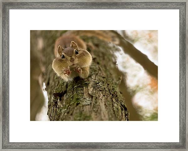 Don't You Even Try To Grab My Nuts! Framed Print