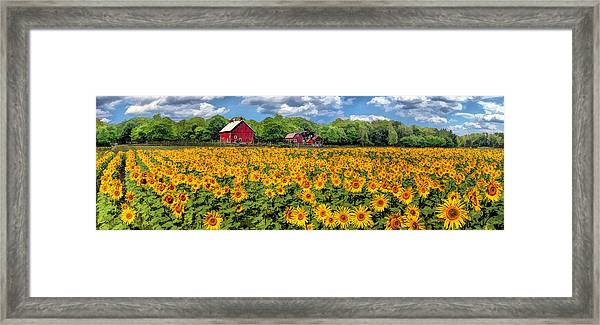 Door County Field Of Sunflowers Panorama Framed Print