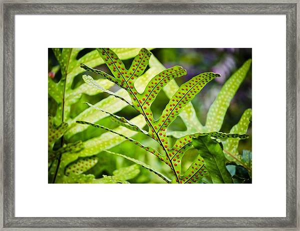 Dotty Framed Print