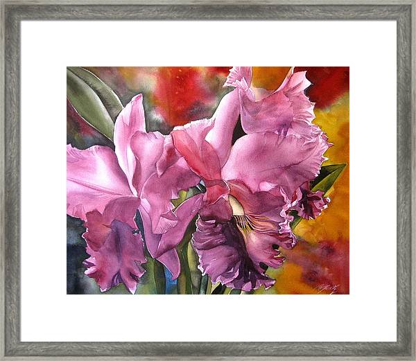 Double Cattleya Orchid Framed Print