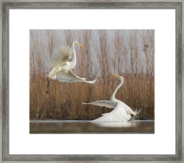 Double Dance - 2 Framed Print by Cheng Chang