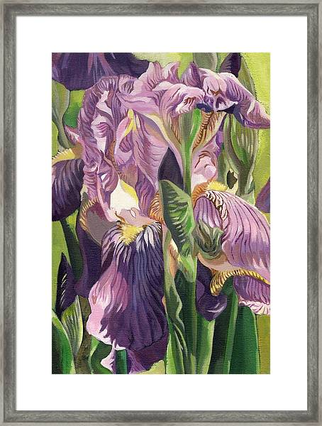 Double Purple Irises -painting Framed Print